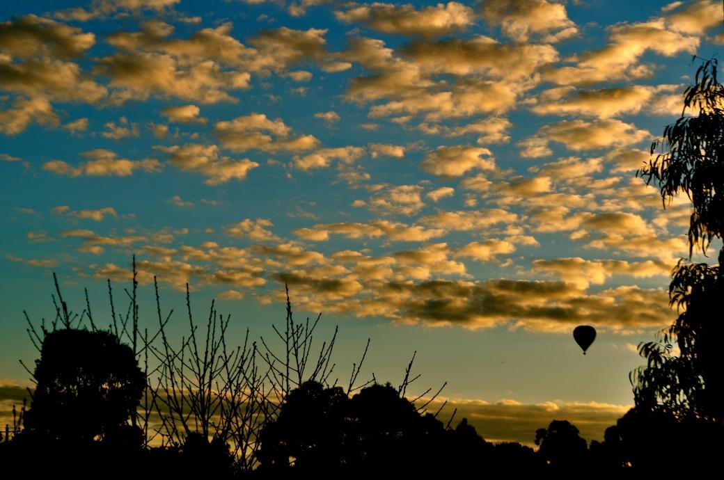 Afternoon Flight, Mornington Peninsula, Australia